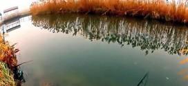 路亚视频:路亚对象鱼攻击(刺激)